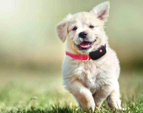 Hunde und andere Haustiere lassen sich mit Yepzon One tracken