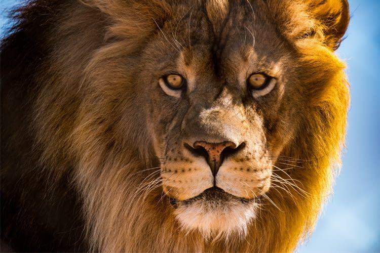 """Wir verraten, welche Produkte aus der """"Die Höhle der Löwen"""" beliebt sind"""