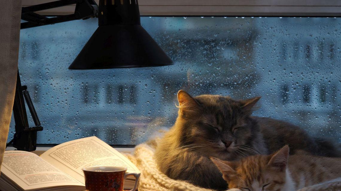 Belkin WeMo Licht einschalten bei Regen