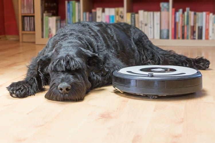 Billige Saugroboter entfernen Hunde- oder Katzenhaare oft nicht zuverlässig