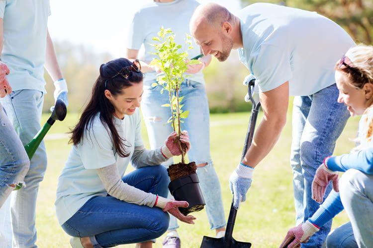 Für jede gebuchte Übernachtung pflanzt bookitgreen einen Baum