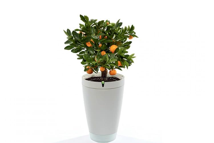 Der Parrot Bot ist der intelligente Blumentopf 2.0