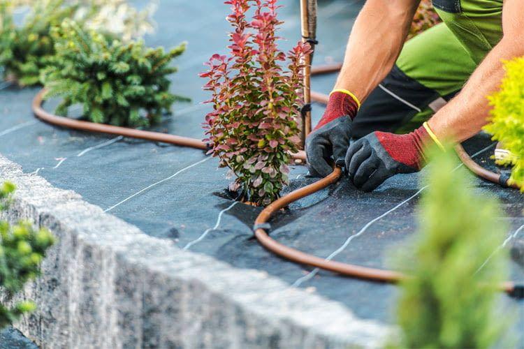 Wer eine Tropfbewässerung installiert, profitiert von geringen Verdunstungsverlusten