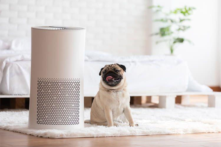 Manche Luftfilter sind speziell auf die Bedürfnisse von Haustierhaltern ausgerichtet