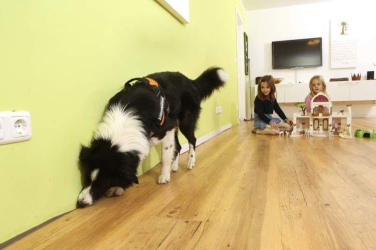 Hunde können Schimmel in Wänden oder Fassaden riechen