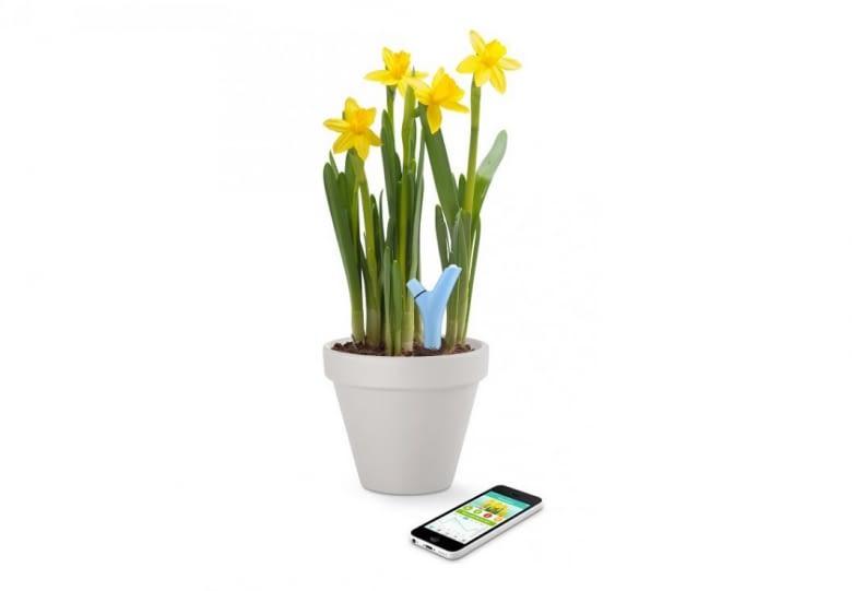 Parrot Flower Power smartes System für Kübelpflanzen