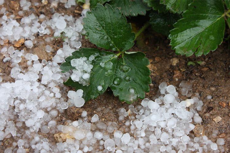 Die Wetterstation warnt uns vor Unwettern und Hagelschäden
