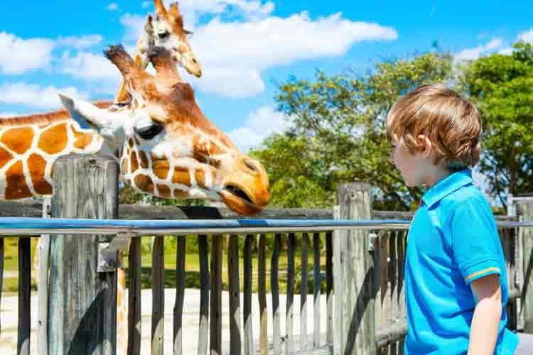 Mama ich will eine Giraffe! Alexa befeuert solche Wünsche mit dem Haustier-Entscheidungs-Skill