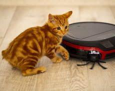 Wir stellen Saugroboter für Tierhaare von Katzen und Hunden vor