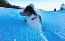 furryfit ist Aktivitätstracker und Gesundheitsmonitor für Hunde in einem