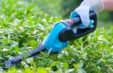 Akku Heckenscheren erleichtern und beschleunigen die Gartenpflege
