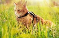"""Katze auf Pirschjagd? Kippy meldet, wenn sich die Katze aus dem erstellten """"Geofence"""" bewegt"""