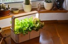 Mit der GreenBox von BerlinGreen kann Jeder  Gärtner werden